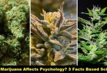 How Marijuana Affects Psychology? 3 Facts Based Science