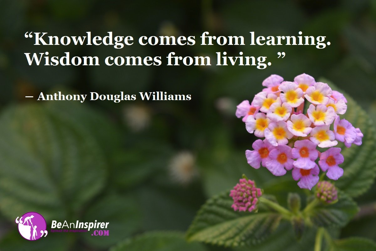 369 Wisdom Quotes for Wise Thinking   Words of Wisdom