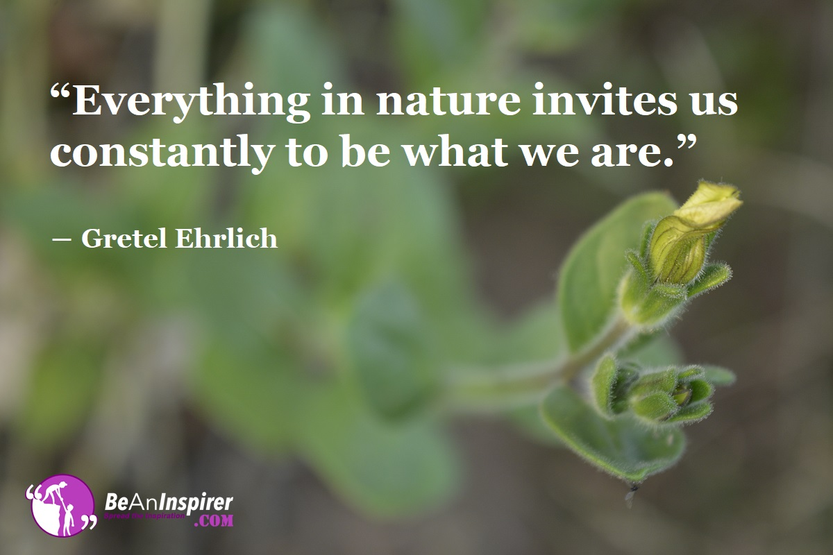 5 Reasons Why We Should Value Nature In Life